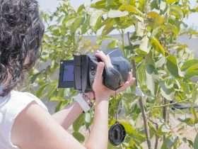 Uso de cámara termográfica en evaluaciones de Nogal